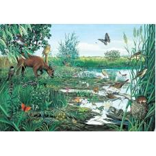 Marsh and Peatland